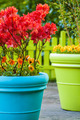 Colorful garden view with a blue and a green flower pot - PhotoDune Item for Sale