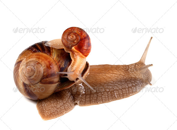 Small snail on top of big - Stock Photo - Images