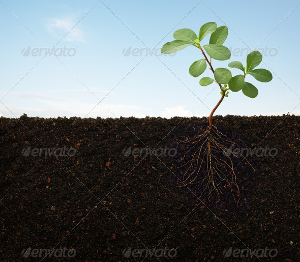 roots of a plant - Stock Photo - Images