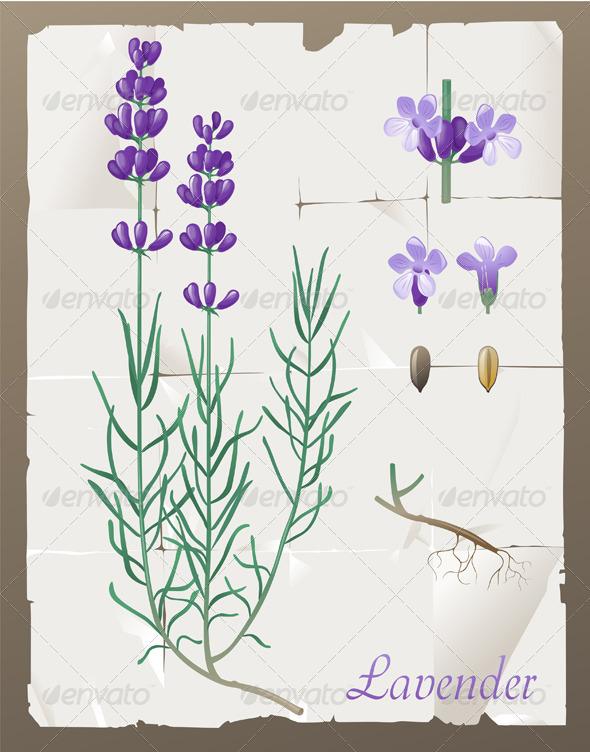 GraphicRiver Lavender 4563275