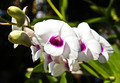 Beautiful orchid - PhotoDune Item for Sale