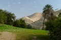 Oasis in Judean Desert at Wadi Qelt near Jericho in spring - PhotoDune Item for Sale