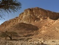 Acacia trees at the bottom of the desert hill near the Dead Sea at sunset - PhotoDune Item for Sale