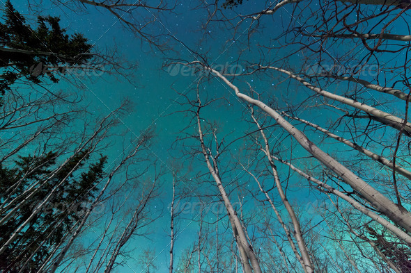Green swirls of Northern Lights over boreal forest - Stock Photo - Images