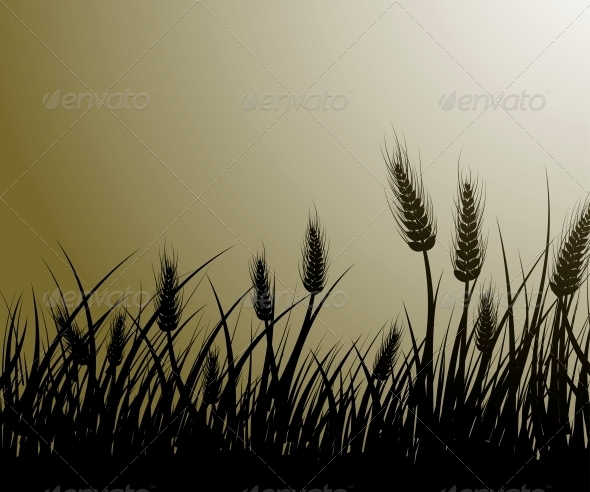 GraphicRiver Field of Wheat 4572977