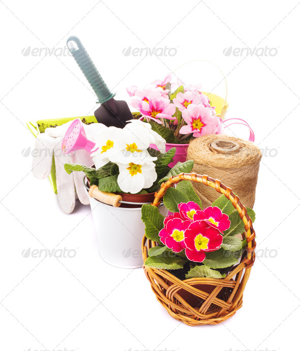 Gardening isolated - Stock Photo - Images