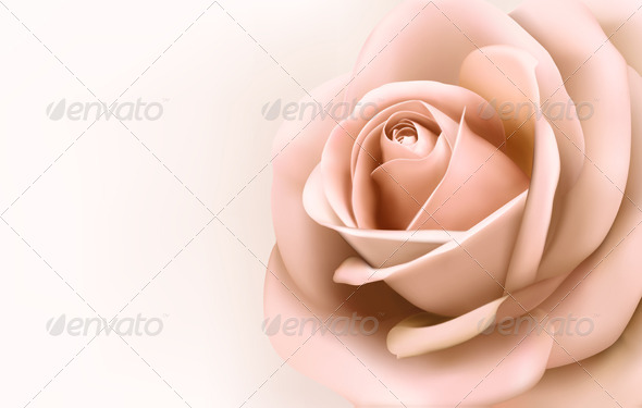 GraphicRiver Background with Beautiful Pink Rose 4575249