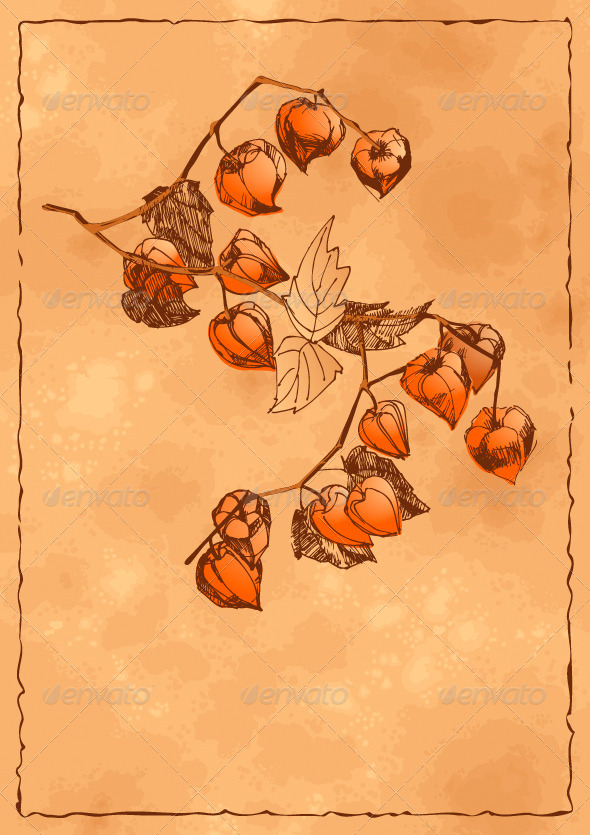 GraphicRiver Autumn Background with Orange Physalis 4575632
