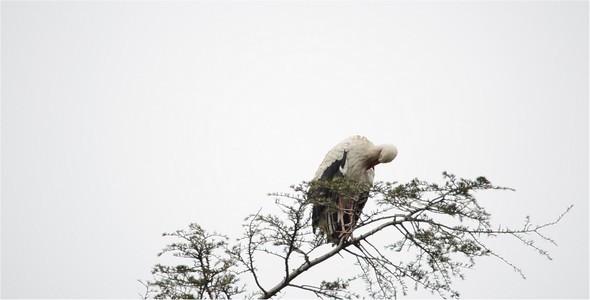 Stork 7