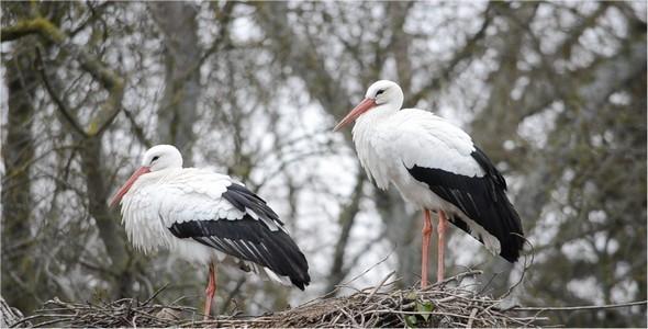 Stork 10