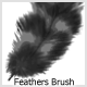 Feathers  Brushes