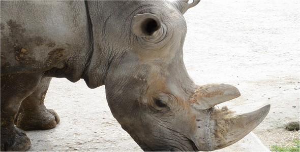 torrent 3d car modeling with rhinoceros
