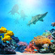 Underwater scene. Coral reef, fish groups, sharks in clear ocean water - PhotoDune Item for Sale