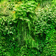 Tropical plants green background. - PhotoDune Item for Sale