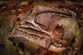 Rusty automobile decay - PhotoDune Item for Sale