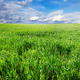 field and sky - PhotoDune Item for Sale