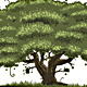 Big Oak Tree - GraphicRiver Item for Sale