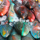 Parrot fish at phuket - PhotoDune Item for Sale