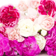 Beautiful bunch of dianthus caryphyllus - PhotoDune Item for Sale