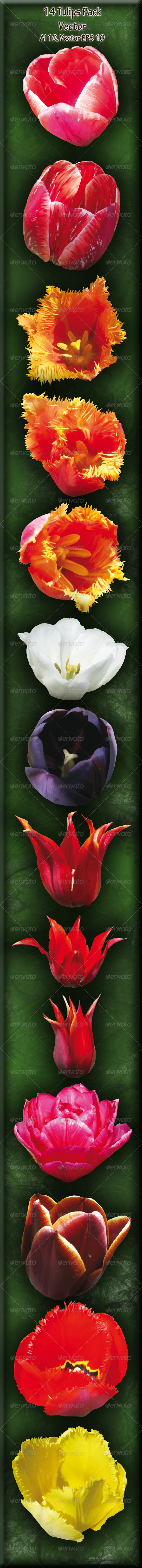 GraphicRiver 14 Tulips Pack 4591218