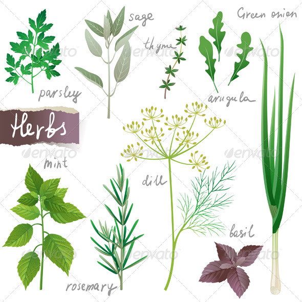 GraphicRiver Herbs Set 4592227