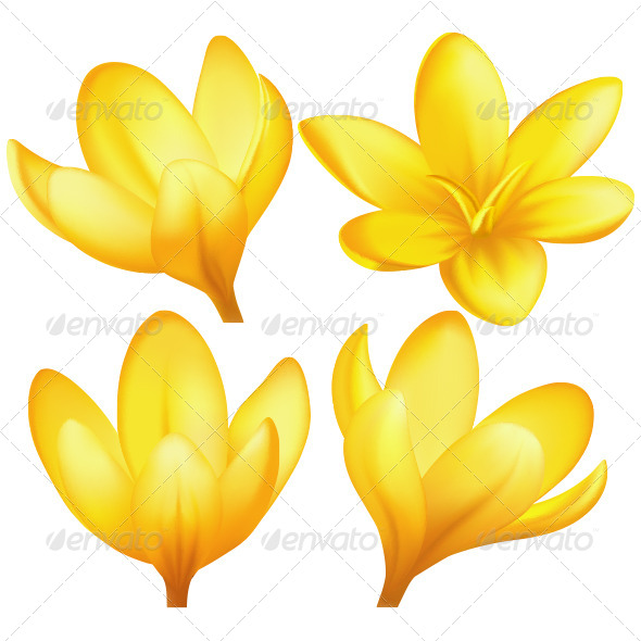 GraphicRiver Vector Yellow Crocuses 4597811