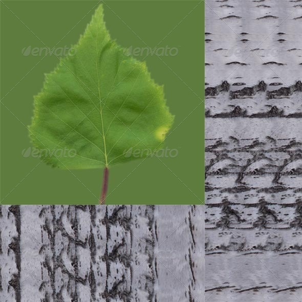 3DOcean Birch Leaf And Bark 4599133