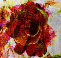 Rose Abstract Textured - PhotoDune Item for Sale