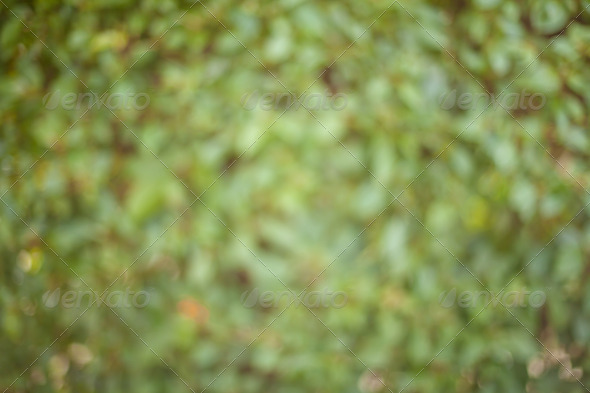 Sunny Abstract Green Nature Background, Selective Focus - Stock Photo - Images