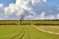 Pastoral scene in English Countryside - PhotoDune Item for Sale
