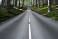 asphalt road in forest landscape - PhotoDune Item for Sale