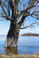 Tree flooded with water due to flooding - PhotoDune Item for Sale