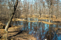 The forest in the water during the flood - PhotoDune Item for Sale