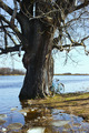 Flooded with water tree as a result of flooding - PhotoDune Item for Sale