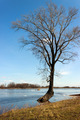 Tree in the spring floods inundated - PhotoDune Item for Sale