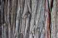Old tree bark texture detail close up - PhotoDune Item for Sale
