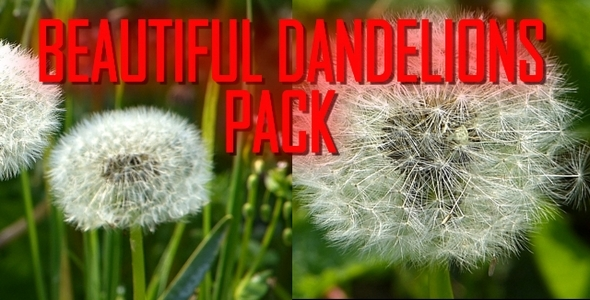 Beautiful Dandelions Pack