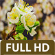 Plum Flower Time Lapse - VideoHive Item for Sale