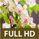Apple Flower Blossoms - VideoHive Item for Sale
