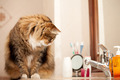 Cat Watching The Water From The Faucet - PhotoDune Item for Sale