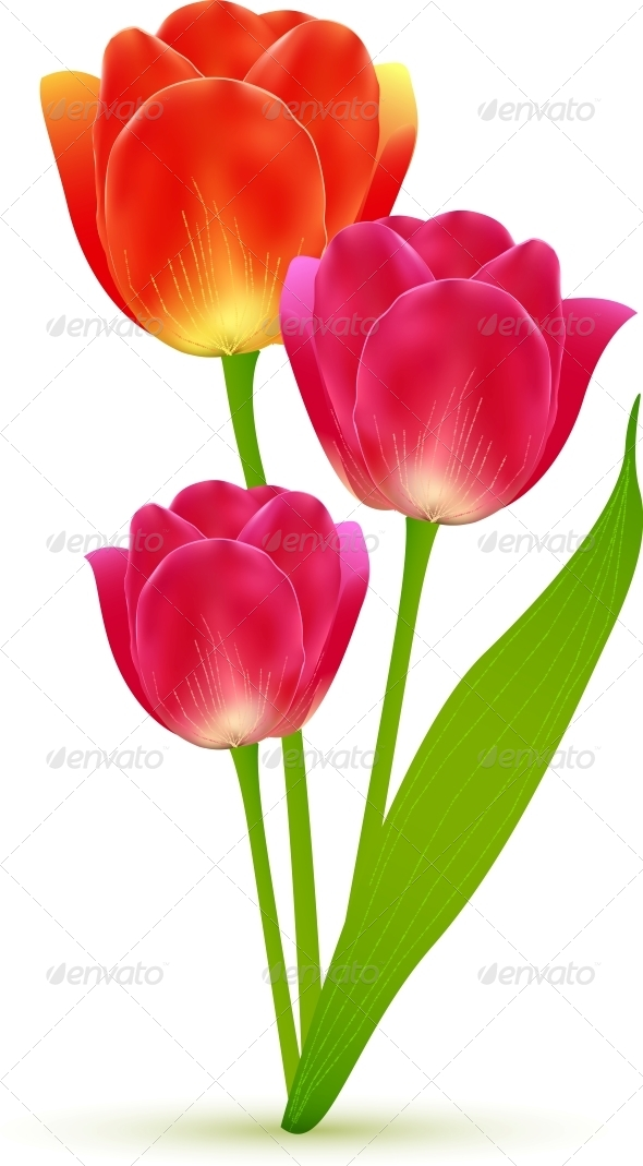 GraphicRiver Vector Isolated Tulip Flowers Bouquet 4621282