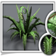 Animated Fern Grass - 3DOcean Item for Sale