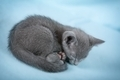 Beautiful cat - PhotoDune Item for Sale