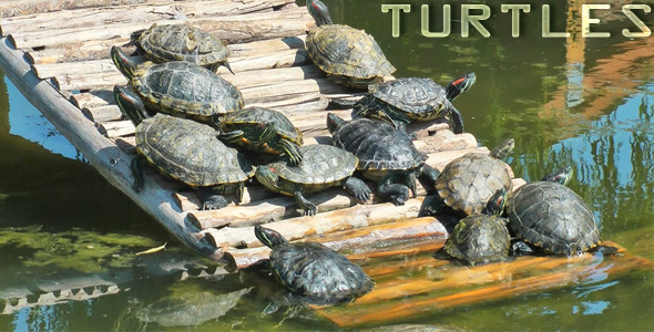 Download Turtles nulled download