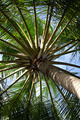 Closeup detail of a coconut palm tree - PhotoDune Item for Sale