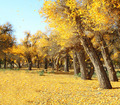 Golden fallen leaves in fall - PhotoDune Item for Sale