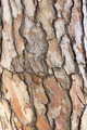 Tree Bark - PhotoDune Item for Sale