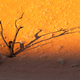 Sunset in Dead Vlei, Namibia - PhotoDune Item for Sale