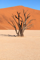 Dead vlei tree in Namibia - PhotoDune Item for Sale