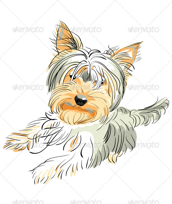 Graphic River Vector pedigreed dog Yorkshire terrier Vectors -  Characters  Animals 484558